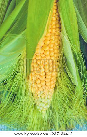 Fresh Corn Cob Between Green Leaves