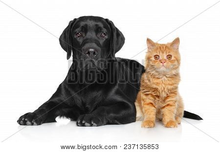 Cat And Dog Together Posing On A White Background.