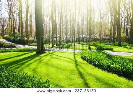 Trees, Green Grass And Flowers In The Park In Spring