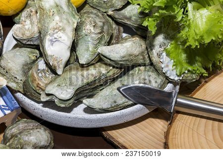 Many Raw Oysters On A Plate, Seafood, Delicatessen