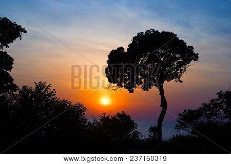 Vivid Blue Orange Sunset Sky. Dark Tree Silhouette On Sky Background. Summer Travel On Tropical Isla