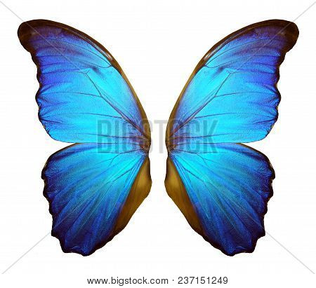 Wings Of A Butterfly Morpho. Morpho Butterfly Wings Isolated On A White Background