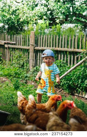 A Small Child On The Farm Feeds The Chickens Bread