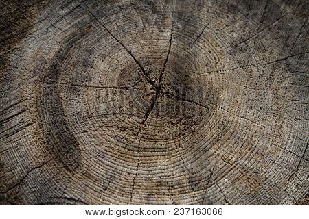 Old Cut Wood Background With Cracks And Rings
