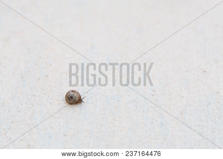 A Grape Snail With A Brown Shell Sinks On A White Textured Surface
