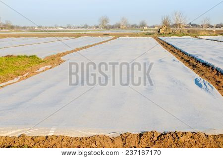 Spunbond Hotbeds For Vegetable Seedlings Against Night Frost In Field, Farming, Agriculture
