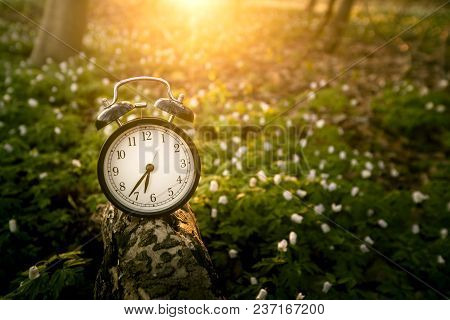 Alarm Clock In The Sunrise Over A Forest In The Spring With Anemone Flowers Covering The Forest Floo