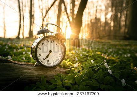 Alarm Clock In A Forest With Many Anemone Flowers In The Spring And With A Sunrise In The Background