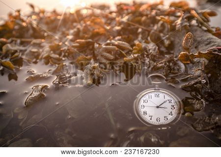 Antique Pocket Watch Under Water On A Lake With Seaweed In The Morning Sunrise