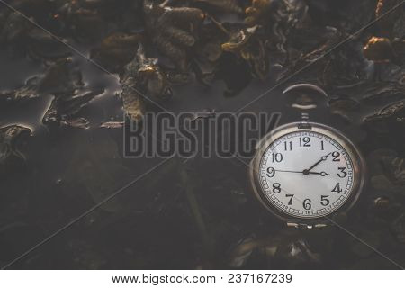 Pocket Watch Floating In A Dark Lake With Seaweed In The Early Autumn