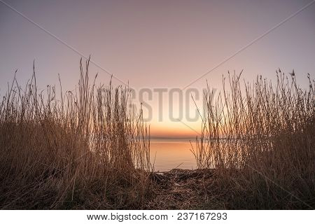 Rushes By A Lake In The Sunrise With Calm Waters And Violet Sky