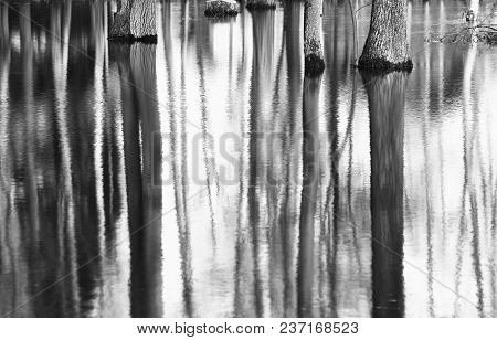 Trees Trunk Water Reflections Landscape Background Hd