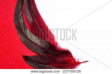 Red feathers. Carnival. Colored feathers