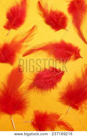 Red feathers on a yellow background. Carnival. Colored feathers