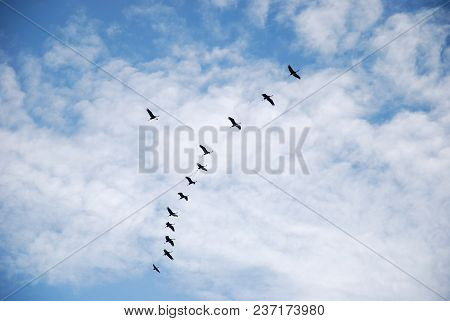 Migrating Common Cranes In Formation By A Sky With White Clouds