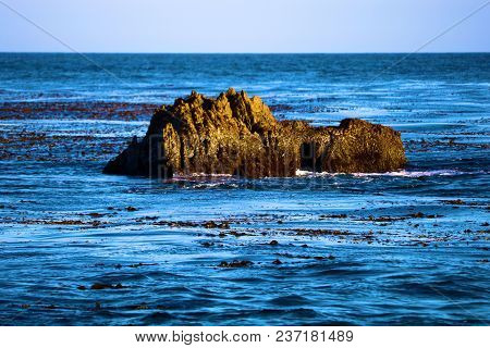 Isolated Rock Surrounded By Seaweed And A Kelp Plant Forest Taken In The Rugged California Coast