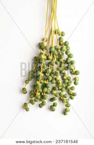 A big bunch of fresh growing green dates on white background. Unripe Arabic date fruit sample from the wadi.