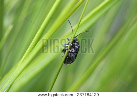 bug in the green nature