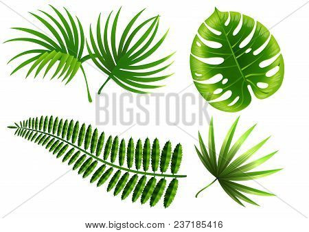 Realistic Vector Illustration Of Tropical Plant Leaves Set. Monstera, Fern, Palm, Yucca. Tropical Pl