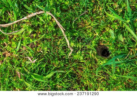 A Hole In The Soil In The Garden. The Spider Looks Out Of The Burrow