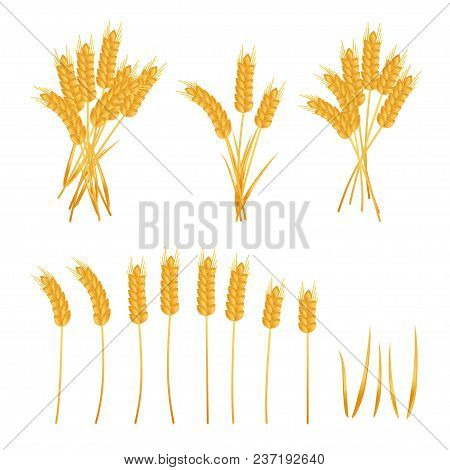 Wheat Set, Wheat Ears And Sheaf Of Wheat, Isolated On White Background