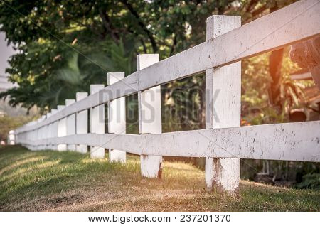 Rural Wooden Old Fence In Garden With Plant And Tree