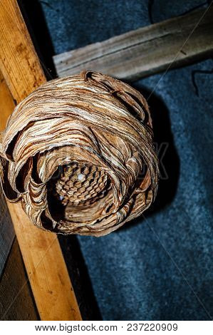 A Nest Of Hornets Hangs Under The Roof Of A Country House