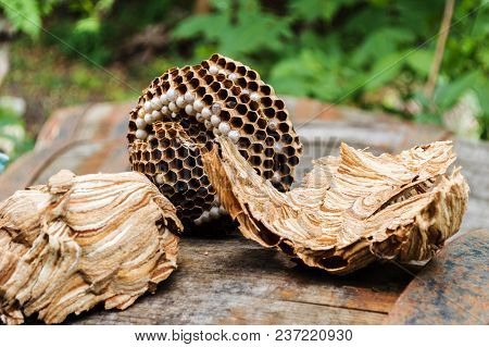 A Brown Nest Of Hornets On A Wooden Barrel On A Summer Sunny Morning
