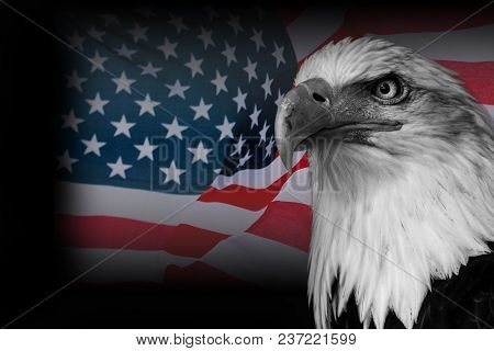 Usa Flag With American, Black And White Eagle