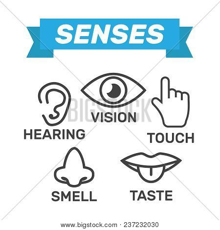Icon Human Senses: Vision, Smell, Hearing, Touch, Taste. Icons Sense Nose, Ear, Eye, Hand Vector