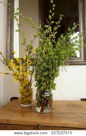 Green Tree Branches And Forsythia Branches With Yellow Flowers  In Entryway.  Bouquets Of Spring Bra