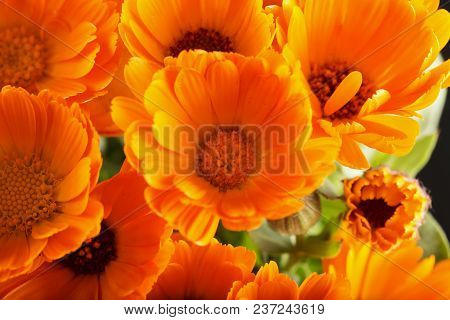 Yellow Daisies Seen From Above