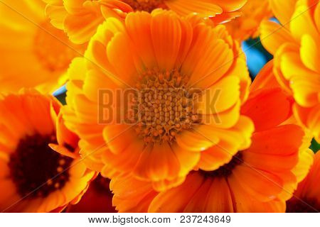 Yellow Daisies In A Bunch