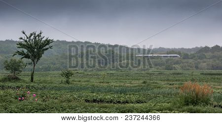 Green Meadow In  Background Of  Forest And Gloomy Sky, In  Distance There Is A Train