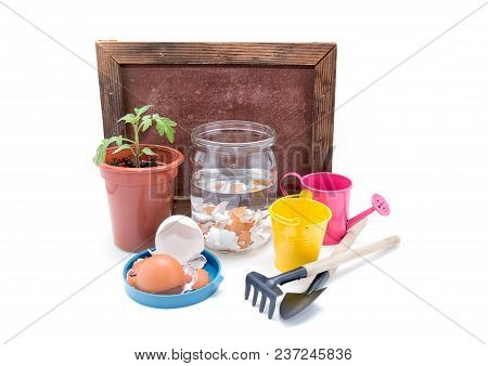 Top-dressing Of Tomatoes With Calcium. Seedlings Of Tomatoes And Eggshell In A Jar With Water On A W