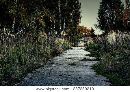 Wet Path In Beautiful Autumn Forest. The Trees Shimmer With All The Colors Of Autumn Road Through Th