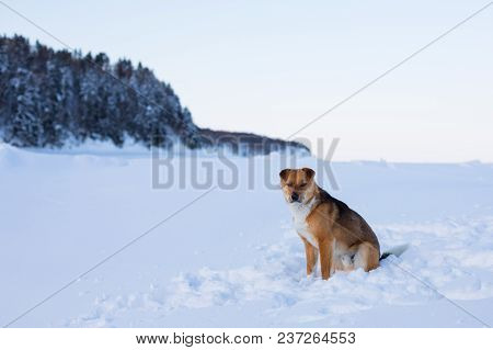 Portrait Of Lovely Mongrel Dog Sitting On The Ice Floe Of The Frozen Sea. Profile Portrait Of Beauti