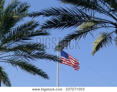 American Flag And Palm Trees On Blue Sky Background. Natural Light Selective Focus