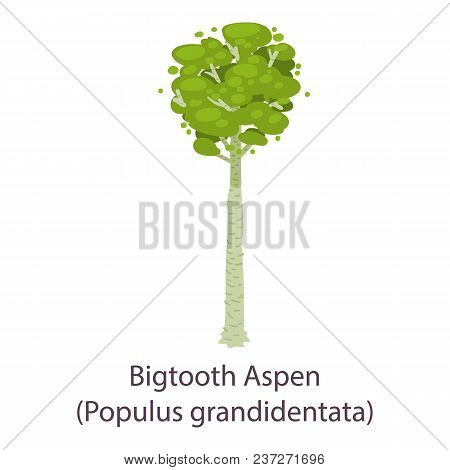 Bigtooth Aspen Icon. Flat Illustration Of Bigtooth Aspen Vector Icon For Web