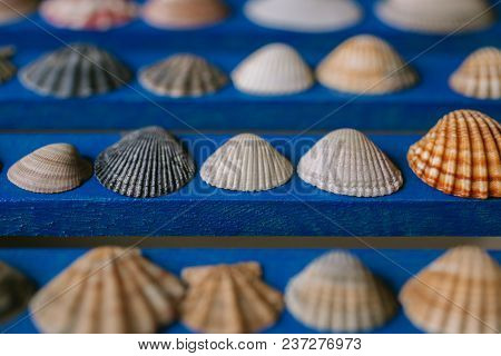Close Up View Of Many Different Seashells On Blue Wooden Background. Seashell Collection.
