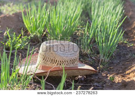 Hat Farmer In The Garden On A Bed Of Onions