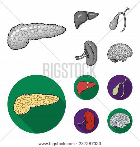 Liver, Gallbladder, Kidney, Brain. Human Organs Set Collection Icons In Monochrome, Flat Style Vecto