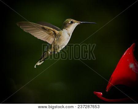 Hovering Hummingbird Frozen In Mid-air Near Liquid Feeder