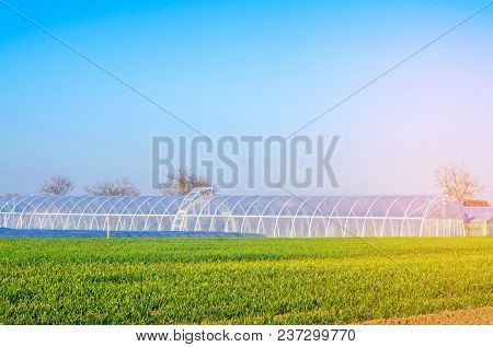 Greenhouses In The Field For Seedlings Of Crops, Fruits, Vegetables, Lending To Farmers, Farmlands,