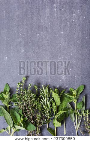 Fresh herbs and spices leaves on a grey stone texture background, minimal design. Herbs collection.