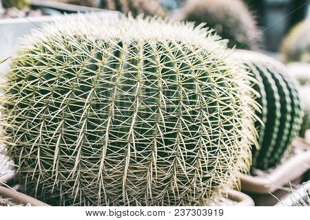 Tropical Natural Green Cactus Texture. Abstract Natural Pattern Texture, Exotic Spiny Background