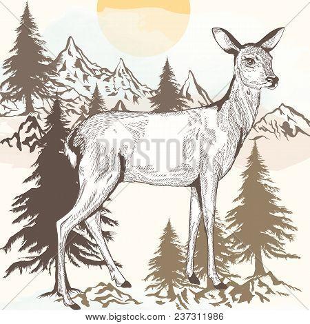 Hand Drawn Engraved Deer Vector Fauna Illustration
