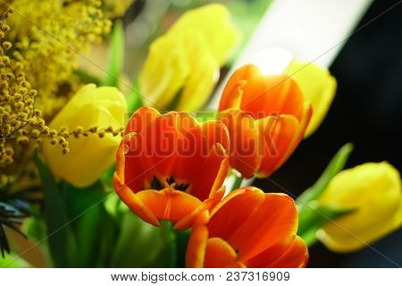 Bouquet Of Yellow And Red Tulips, And Yellow Mimosa. Floral Background. Spring Mood.