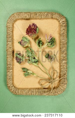 Herbarium. Clover, Trefoil. Dry Plants In Framework Made Of Jute Thread. Scrapbooking. Dried Flower.