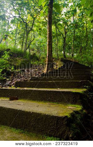 Old And Mossy Stairs In The Middle Of Forest. Surrounded By Trees